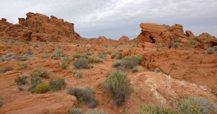 Kasyna w pustynnych regionach